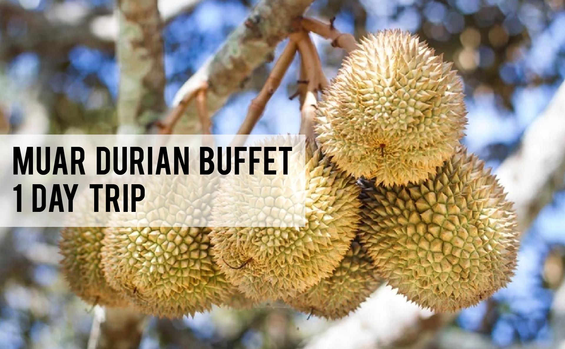 muar durian buffet 1 day trip